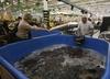 Znana sieć hipermarketów rezygnuje ze sprzedaży żywych karpi. Jako pierwsza w Polsce!