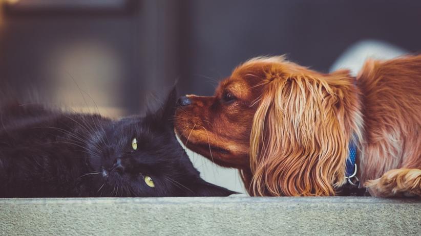 Masz psa lub kota? Rząd nałoży na ciebie nowy obowiązek!