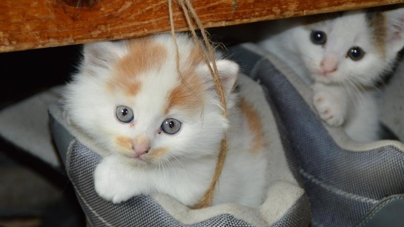 Zabił koty na oczach dzieci