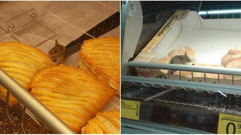 Myszy w Biedronce. Gryzonie na półkach ze słodkim pieczywem