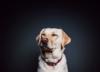 Quiz - rasy psów