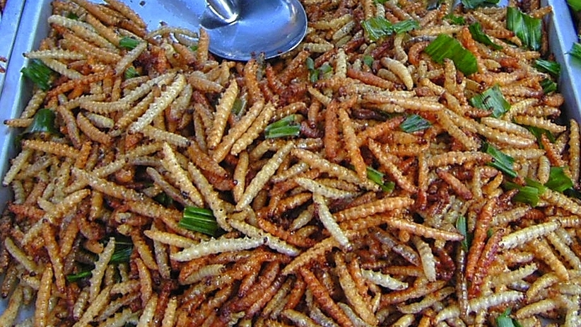 Dania z owadów w ofercie jednego z supermarketów