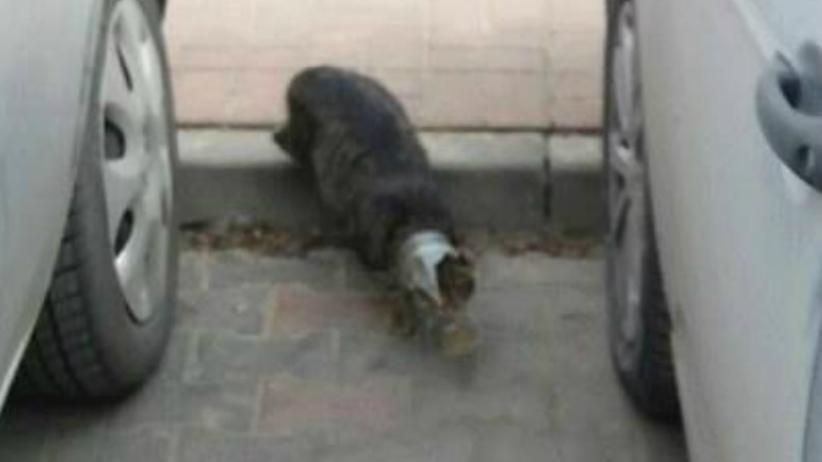 kot ze słoikiem na głowie