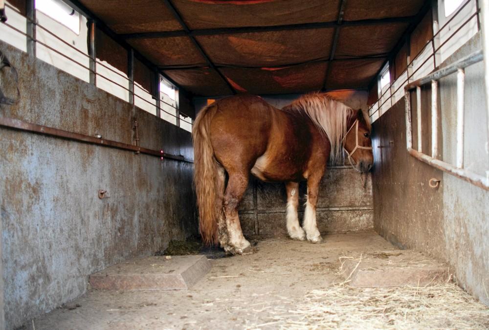 konie-skaryszew-jarmark