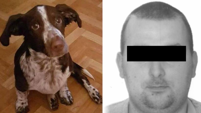 Pies Fijo, Bartosz D.