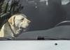 Pies zamknięty w nagrzanym samochodzie. Policjanci wybili szybę