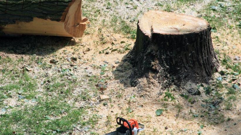 Tragedia podczas wycinki drzew. Pień zabił 50-letniego pilarza