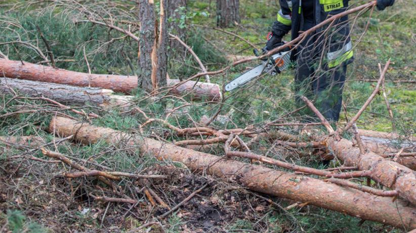 Drzewo runęło na namiot harcerzy. W środku znajdowały się cztery dziewczynki
