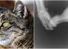Bydgoszcz. Postrzelona 1,5-roczna kotka. Policja szuka sprawcy