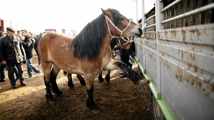 Jarmark koni w Skaryszewie