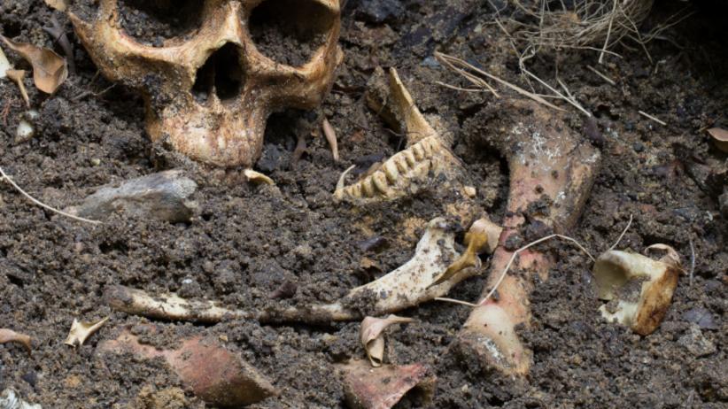 """Ludzkie szczątki na wysypisku. """"Ciężarówki przywożą ziemię..."""""""