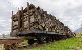 Drewno z nielegalnej wycinki na Ukrainie trafia do Polski
