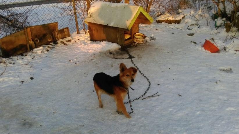 Gdańszczanin wyprowadzając się z domu, przywiązał do budy psa