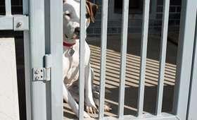 Kalisz: kobieta znęcała się nad ponad setką psów