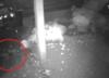 Pijany mężczyzna chciał zgwałcić psa. Właścicielka opublikowała dramatyczne WIDEO