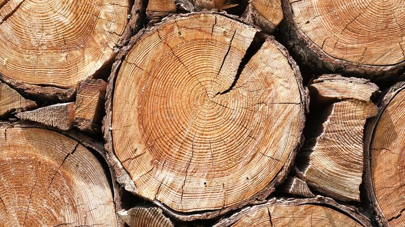 Puls Biznesu: kłopoty branży drzewnej w Polsce. UE przyjęło nowe regulacje