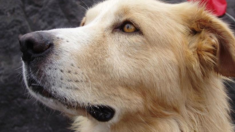 Bestialsko powiesił psa. Fundacja oferuje nagrodę za wskazanie sprawcy