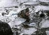 Martwa foka nad Bałtykiem. To kolejny taki przypadek