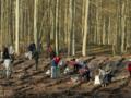 Koniec dzikiego wycinania drzew. Nowy projekt w miejsce Lex Szyszko