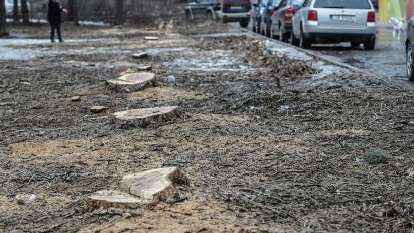 Koszmarny bilans lex Szyszko. Polska straciła miliony drzew