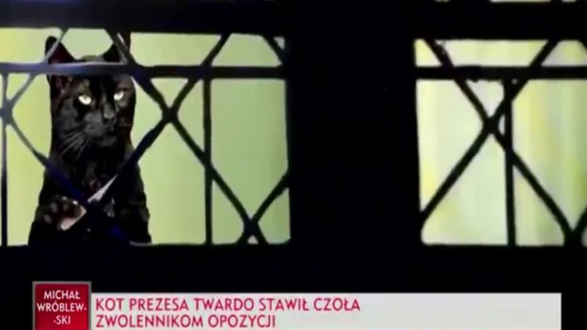 Kot prezesa PiS na pasku w Telewizji Polskiej - twardo stawił czoła opozycji