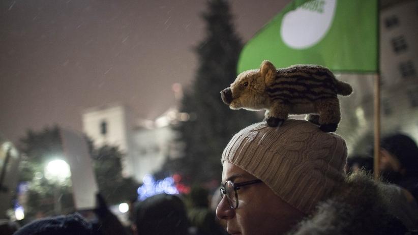 Protesty przed Sejmem ws. odstrzału dzików. Minister Kowalczyk: to plan łowiecki, a nie eliminacja