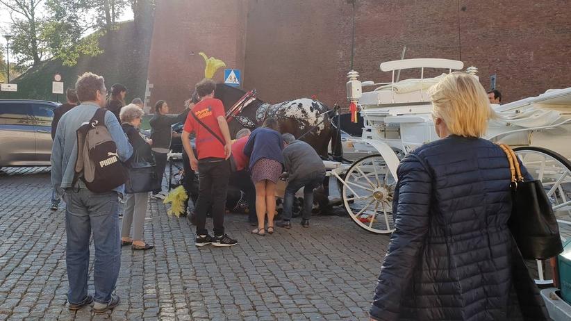 Kraków. Koń upadł w okolicach Wawelu i po chwili wrócił do pracy