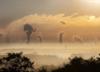 Alarm smogowy. Miasto wprowadza darmową komunikację