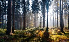 Lasy Państwowe sadzą rocznie pół MILIARDA drzew? Radio ZET sprawdza
