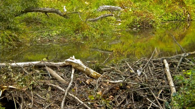 W Łebie wycięto 4 hektary lasu. Prokuratura: burmistrz nie ponosi winy