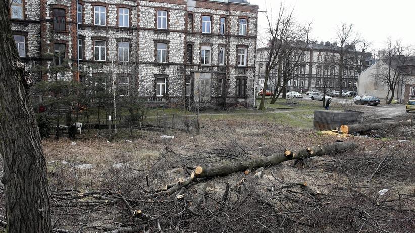 Warszawa będzie przekonywać senatorów do poprawienia ustawy Lex Szyszko