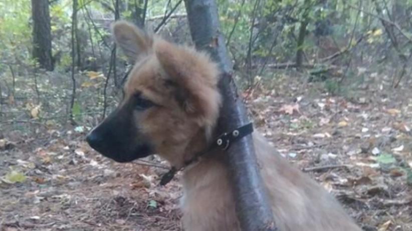 Bestialstwo! Przywiązał szczeniaka do drzewa [FOTO]