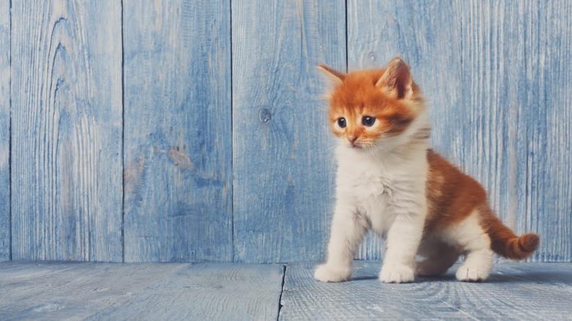 Wyrzucił 4-miesięczne kocię z 3. piętra. Zapłaci tylko grzywnę