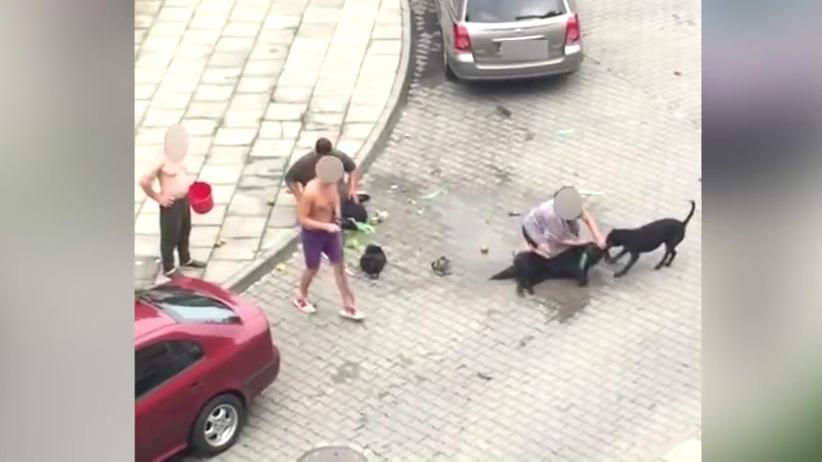 Małopolska. Atak pitbulla w Nowym Sączu, ranna kobieta