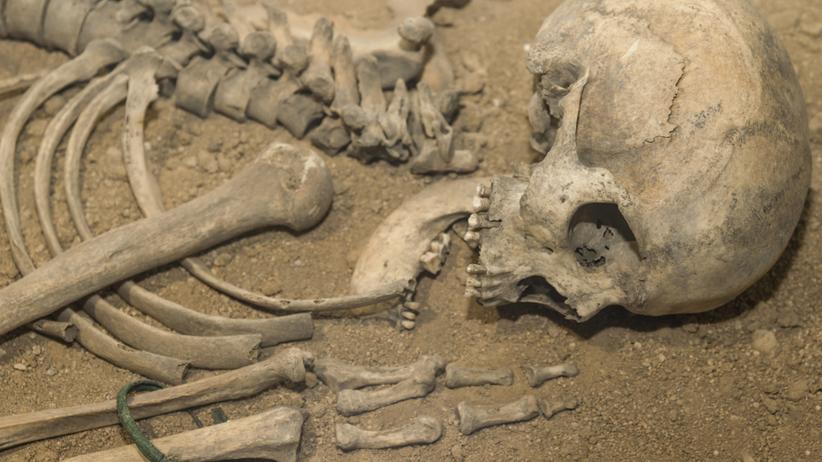 W Małopolsce znaleziono szczątki neandertalskiego dziecka sprzed ponad 100 tys. lat