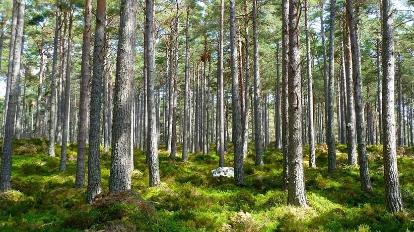 Mandaty dla grzybiarzy. Tego nie wolno robić w polskich lasach