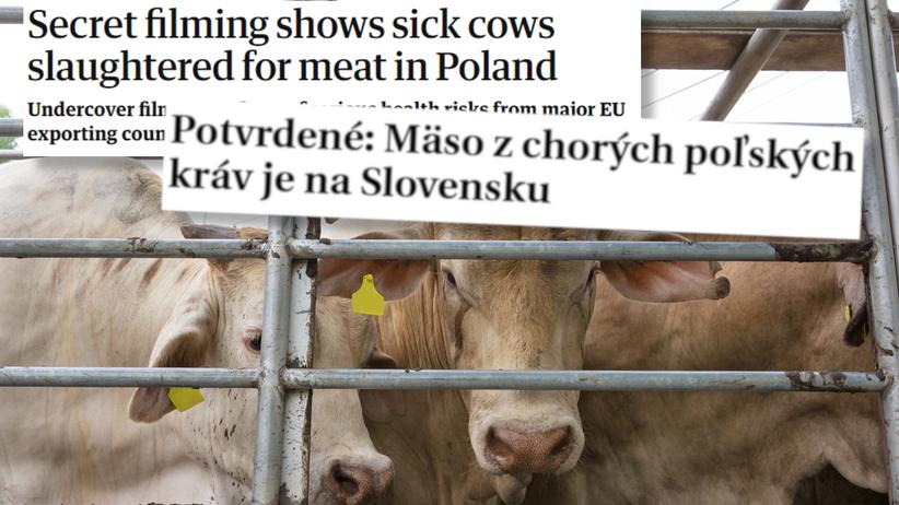 mięso chorych krów