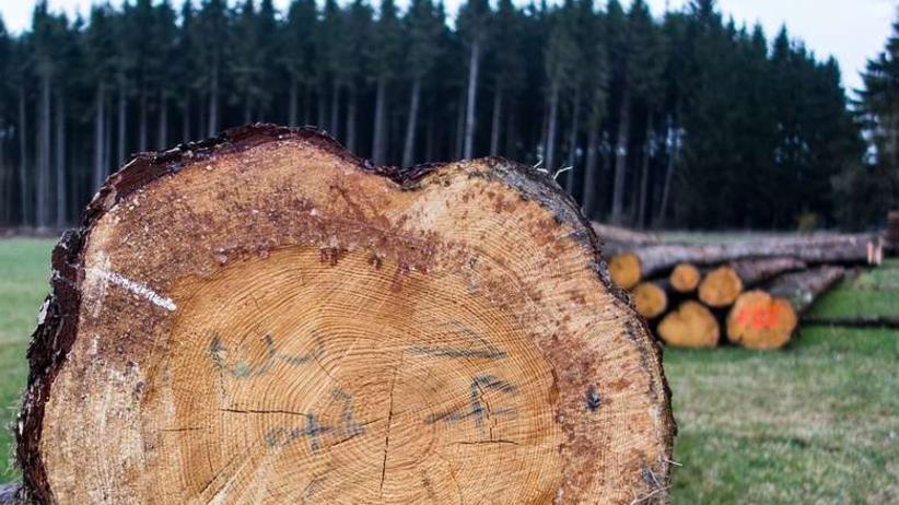 Szykuje się kolejna masowa wycinka drzew? Leśnicy chcą interwencji premier
