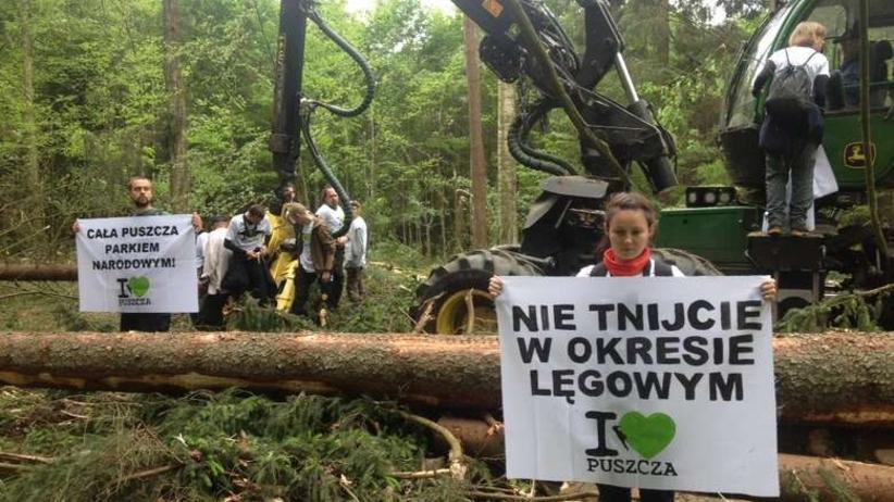 Zwrot ws. Puszczy Białowieskiej. Minister środowiska: Wycinka drzew nie powstrzyma kornika