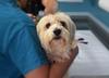 Ministerstwo Finansów proponuje podwyżkę leków dla zwierząt