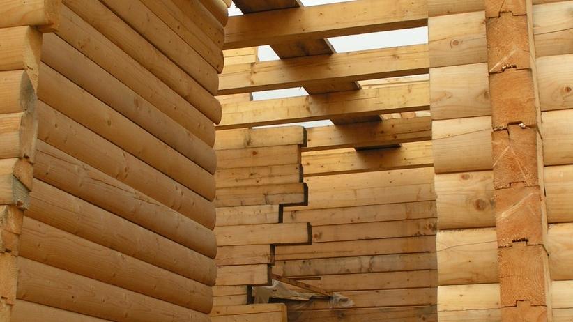 Mieszkanie plus z drewna? Nowy pomysł Lasów Państwowych