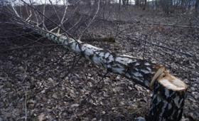 Konar drzewa spadł na 5-latka. Chłopczyk zmarł w szpitalu