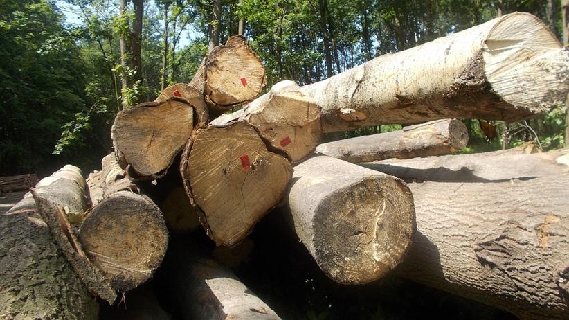 Chcesz wyciąć drzewo? Obowiązują nowe przepisy
