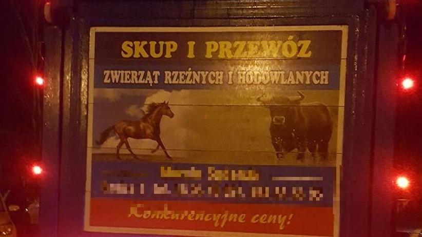 Ocalą konie od rzeźnickiego noża. Zebrali ponad 300 tys. zł