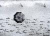 Orkan Fryderyka przeszedł przez Polskę. Morawiecki odebrał meldunki
