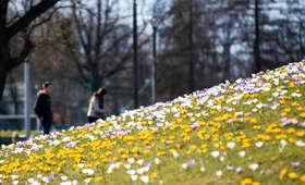 Dziś pierwszy dzień wiosny. Czy zima da się tak łatwo pożegnać?