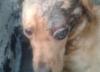 Skatował i żywcem zakopał psa. 5 tys. nagrody za wskazanie zwyrodnialca [FOTO]