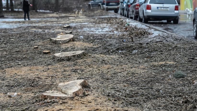Wycinka drzew w Lublinie. Powstanie tu parking.