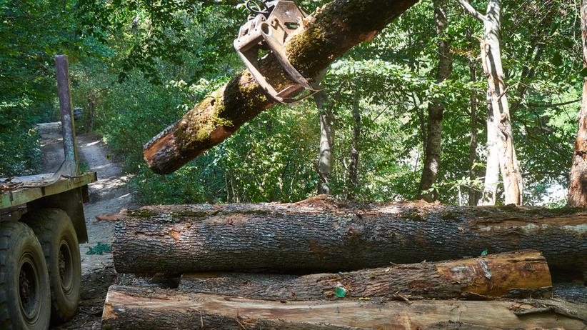 Tragedia w trakcie rozładunku drewna. Konar przygniótł 8-latka. Chłopiec nie żyje