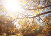 Ciepłe i słoneczne zakończenie października. Będzie nawet 20 stopni! [POGODA]